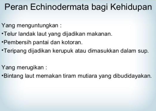 Peran Echinodermata Bagi Kehidupan